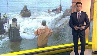 Рыбу начали выпускать в водоемы Тбилисского района Кубани