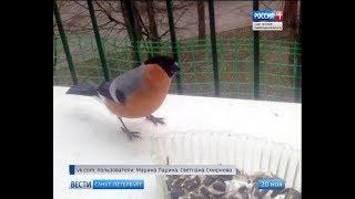 Вести Санкт-Петербург. Выпуск 17:00 от 20.11.2018