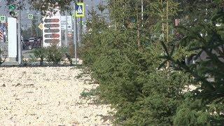 За свой счет: компания-подрядчик заменит погибшие деревья и кустарники на шоссе Авиаторов