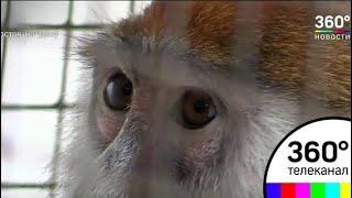 Микроавтобус с обезьянами задержали под Ростовом-на-Дону