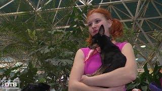 Собачий вальс: в Берёзовском прошли соревнования по танцам с четвероногими