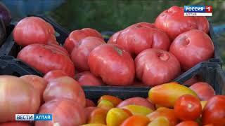 Урожай в подарок: в Рубцовске на 8 Марта дарят помидоры в горшочках