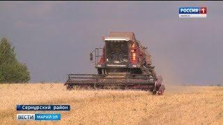 Сельхозпредприятия Сернурского района приближаются к экватору уборочной кампании