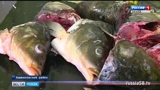 Башмаковские производители рыбы и мяса объединились в кооператив