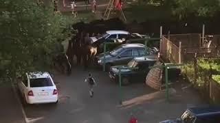 Табун лошадей на улицах Кисловодска