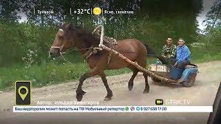 Гибрид лошади и мотоцикла разъезжает по дорогам в Башкирии