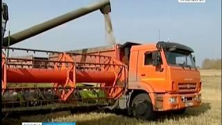 """Агропромышленное предприятие """"Искра"""" из Зеленогорска может увеличить экспорт рапса в КНР"""