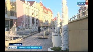 Деревья и кустарники в Ставрополе укутали в теплые одежды