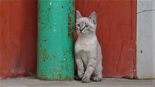 Озорной котёнок ищет дом в Ханты-Мансийске