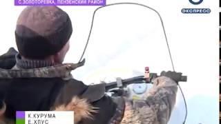 В охотничьих хозяйствах Пензенской области появятся 170 новых оленей