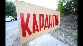 В Калининском районе Уфы введен карантин по бешенству