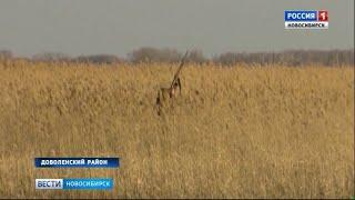 Сезон весенней охоты открыли в Новосибирской области