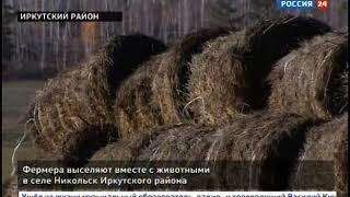 Фермера выселяют вместе с животными в Иркутском районе