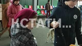 Лекарства и еда из бумаги - нижегородские школьники макулатурой накормили и вылечили животных