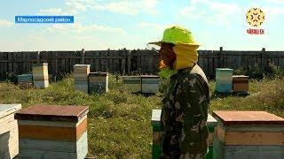Сейчас время собирать не только урожай зерновых, но и мед.