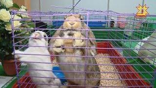 В Чебоксары привезли представителей самых оригинальных пород кроликов и голубей