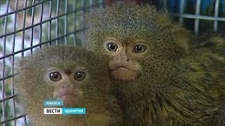 В ижевском зоопарке ожидается новоселье
