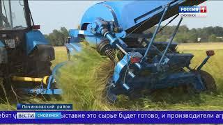 Смоляне готовятся к всероссийскому Дню льняного поля