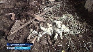 Зоозащитники республики просят прекратить отстрел бездомных собак: репортаж «Вестей»
