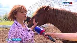 На Краснофлотском острове в Архангельске начали возводить манеж для занятий иппотерапией