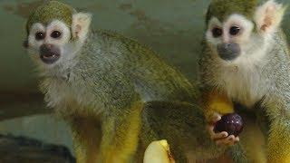 Краснодарский зоопарк готовится отмечать День влюбленных