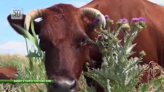 В Курганской области обнаружили зараженных животных. Объявлен карантин