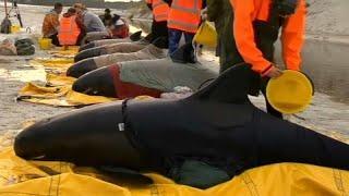 Спасти китов!