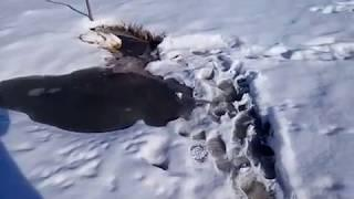 В Челябинской области ветеран труда живет в доме без воды, канализации и отопления 1