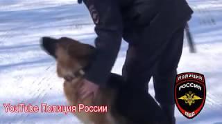 Полиция России-Служебная овчарка помогла полицейским