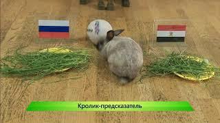 ИКГ Кролик и ставка на матч Египет   Россия #9
