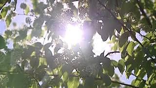В начале следующей недели в регион возвращается лето