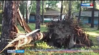 Ураган вырвал с корнем сосны в детском лагере в Пензе
