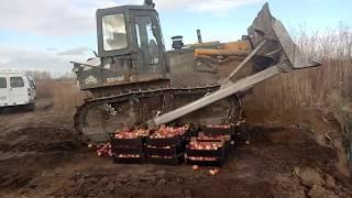 В Красноярске уничтожили больше тонны санкционных яблок