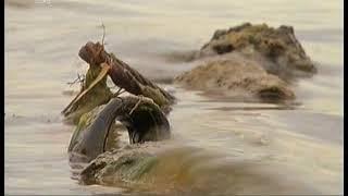 Штрафов нет, а утонули двое  Незаконные пляжи в Челябинске остались без контроля