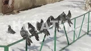 Зоозащитники спасают птиц от малолетних садистов