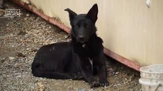 Ужасы собачьего приюта | Новости сегодня | Происшествия | Масс Медиа