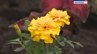 На костромской станции юннатов готовятся к садово-огородному сезону