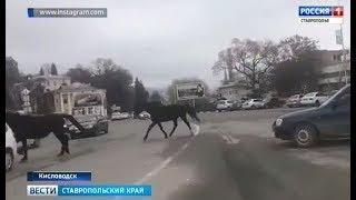 Смешались в кучу кони, люди в центре Кисловодска