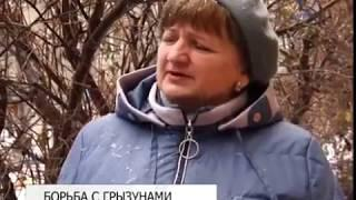 В Белгороде проводят дератизацию