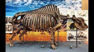 Как назовут единственного в мире безымянного древнего носорога?