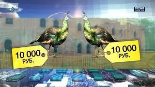 Ради звонницы мини-зоопарк епархии продадут