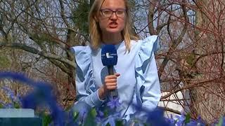 Что сейчас цветёт в ботаническом саду Калининграда