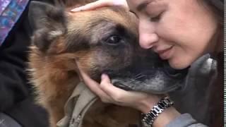 Ярославские волонтеры ищут хозяина для собаки с тяжелой судьбой