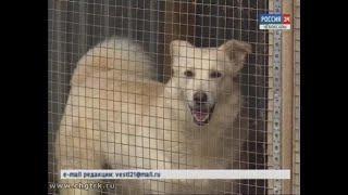 В Чебоксарах пройдет выставка-раздача бездомных собак и кошек