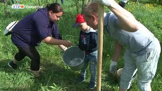 Кедровая роща появится в парке им. С. М. Кирова в Ижевске