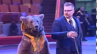 В Ярославле выступят артисты Цирка Филатовых