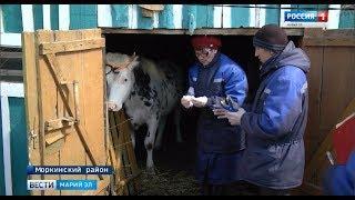 Паспорт для животных и птиц - в Марий Эл началась масштабная идентификация - Вести Марий Эл