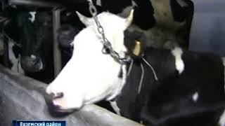 Котиковская ферма в надежных руках