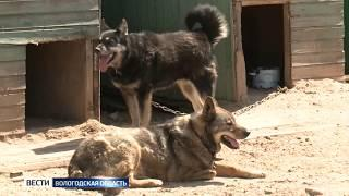 Вологжан приглашают сдать вторсырье для бездомных собак и кошек