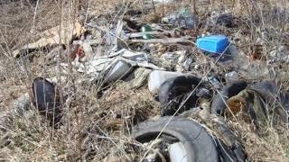 Россельхознадзор рассчитал размер вреда, причиненного окружающей среде